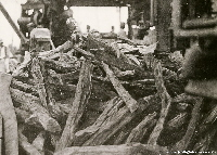 Logwood trunks ready for export, Cuba 1916 | Wild Colours natural dyes